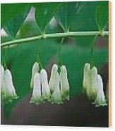 Dainty White Flowers Central Park Wood Print
