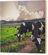 Dairy Cows At Sunset Wood Print