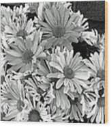 Daises In Black And White Wood Print