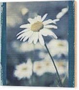 Daisies ... Again - 146a Wood Print