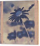 Daisies ... Again - 150ab Wood Print