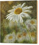 Daisies ... Again - P11at01 Wood Print