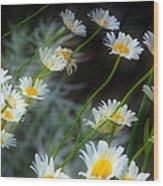 Daisies A Wood Print