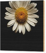 Daisies Are Not Flowers No Text Wood Print