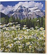 Daisies At Mount Robson Wood Print by Elena Elisseeva