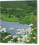 White Daisies At Queens View Wood Print