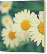 Daisies Wood Print by Candice Trimble