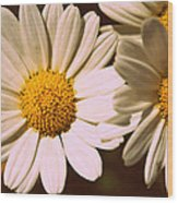 Daisies Wood Print by Chevy Fleet