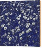 Daisies In Blue Fire Wood Print