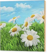 Daisies In Grass Against A Blue Sky Wood Print