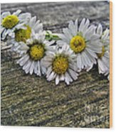 Daisies In Wreath Wood Print