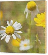 Daisies On Summer Meadow Wood Print
