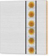 Daisies On White Wood Print