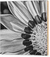 Daisy - Bw Wood Print