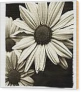 Daisy 1 Wood Print by Tanya Jacobson-Smith