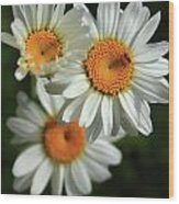Daisy And Friend Wood Print