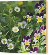Daisy And Pansy Mix Wood Print