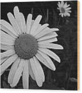 Daisy At Night Wood Print