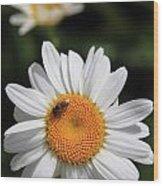 Daisy Bee Nice Wood Print