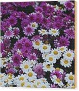 Daisy Bouquet From Dublin  Wood Print