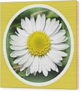 Daisy Closeup Wood Print