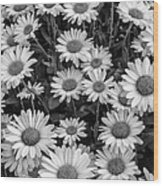 Daisy Cluster Vermont Flowers In Black And White Wood Print