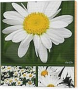 Daisy Collage Wood Print
