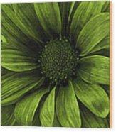 Daisy Daisy Avacado Wood Print