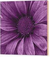 Daisy Daisy Grape Wood Print