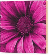 Daisy Daisy Neon Pink Wood Print