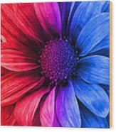 Daisy Daisy Red To Blue Wood Print