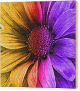 Daisy Daisy Yellow To Purple Wood Print