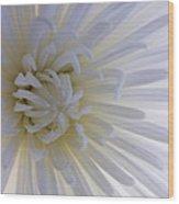 Daisy Dream Glow Wood Print