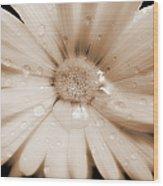 Daisy Dream Raindrops Sepia Wood Print