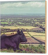 Daisy Enjoys The View From Truleigh Hill Wood Print