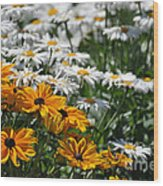 Daisy Fields Wood Print