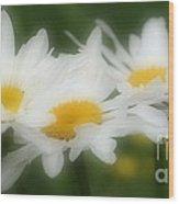 Daisy Flower Trio Wood Print