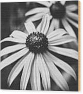 Daisy In The Dark Wood Print