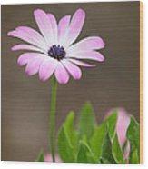 Daisy Mae Wood Print