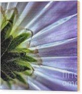 Daisy Petals Abstract Macro Wood Print