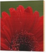 Daisy Red Wood Print