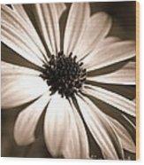 Daisy Shimmer Wood Print