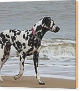 Dalmatian By The Sea Wood Print