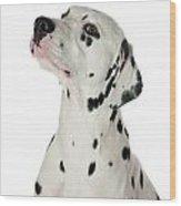 Dalmatian Dog Wood Print