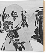 Dalmatians - A Great Breed For The Right Family Wood Print