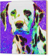Dalmation Dog 20130125v4 Wood Print by Wingsdomain Art and Photography