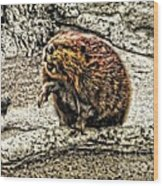 Dam Beaver Wood Print