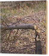 Dam Beavers Again Wood Print