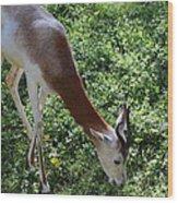 Dama Gazelle - National Zoo - 01137 Wood Print