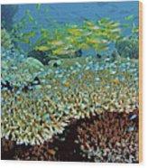 Damselfish (pomacentridae Wood Print